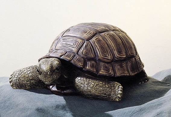 14. F173 tartaruga grande
