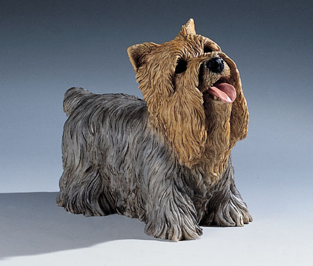 15. F331 yorkshire cucciolo