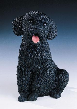 18. F343N barboncino cucciolo seduto