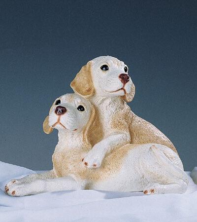 34. F374 coppia labrador cuccioli