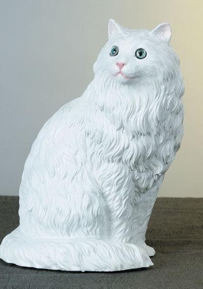 39. F160B gatto persiano