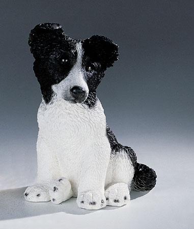 9. F248PN border collie cucciolo
